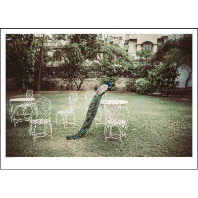 in-my-garden-juliste