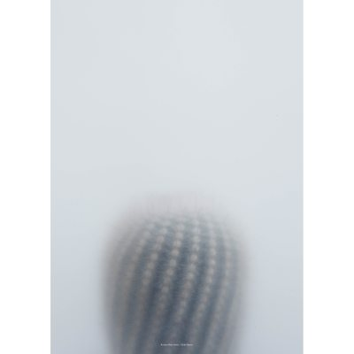 ball-cactus-i-juliste-50x70