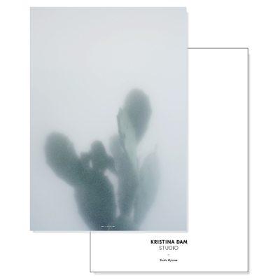 cactus-i-postikortti